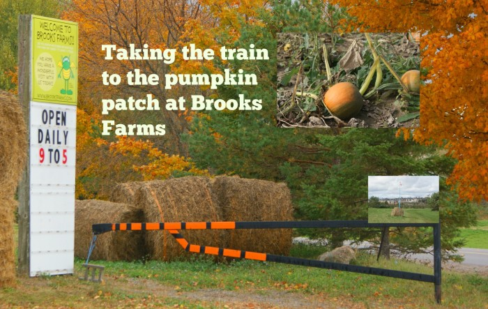 Taking the Train to the Pumpkin Patch at Brooks Farms