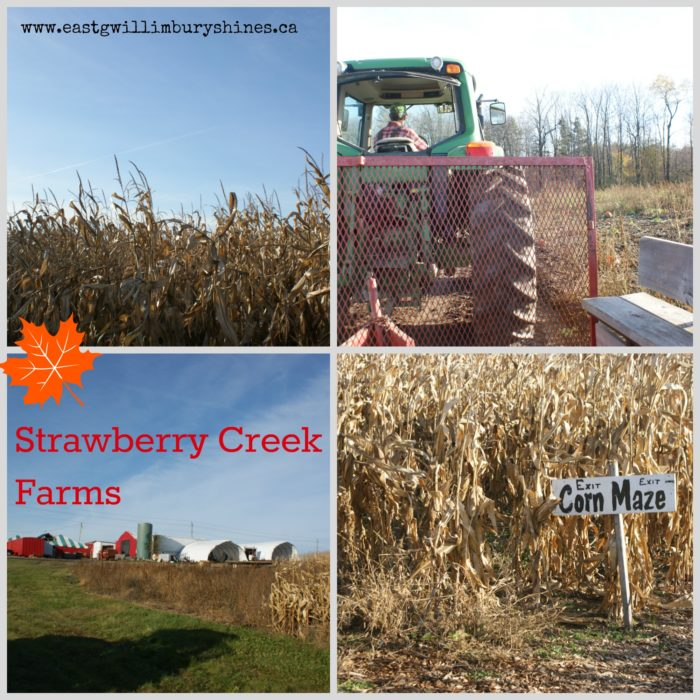 Fall at Strawberry Creek Farms